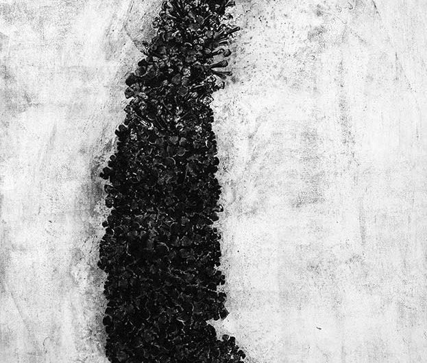 BUTTERFLY BUSH BUDDLEJA DAVIDII, etching on paper, 78 x 118cm